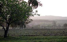 campo uruguayo